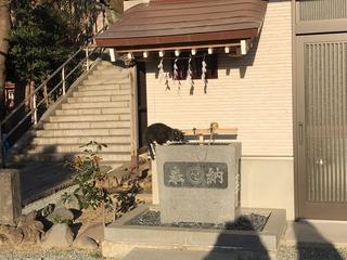 中村八幡宮 猫